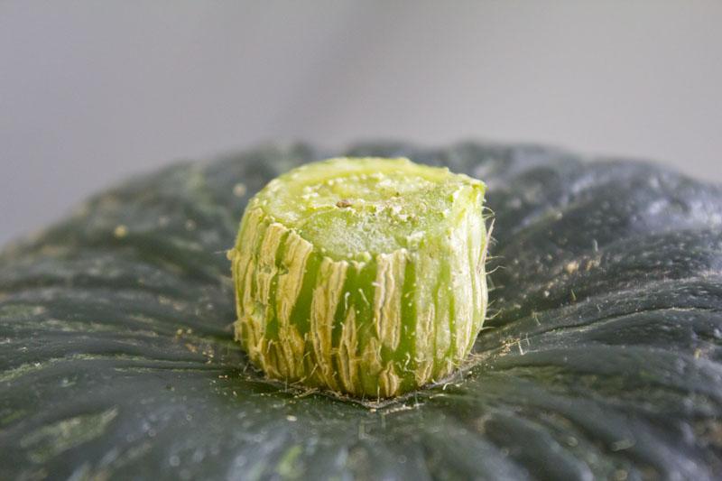 pumpkin-pickles-recipe11